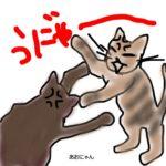 猫の兄弟は仲良し?喧嘩を始めたら飼い主が取るべき行動は?