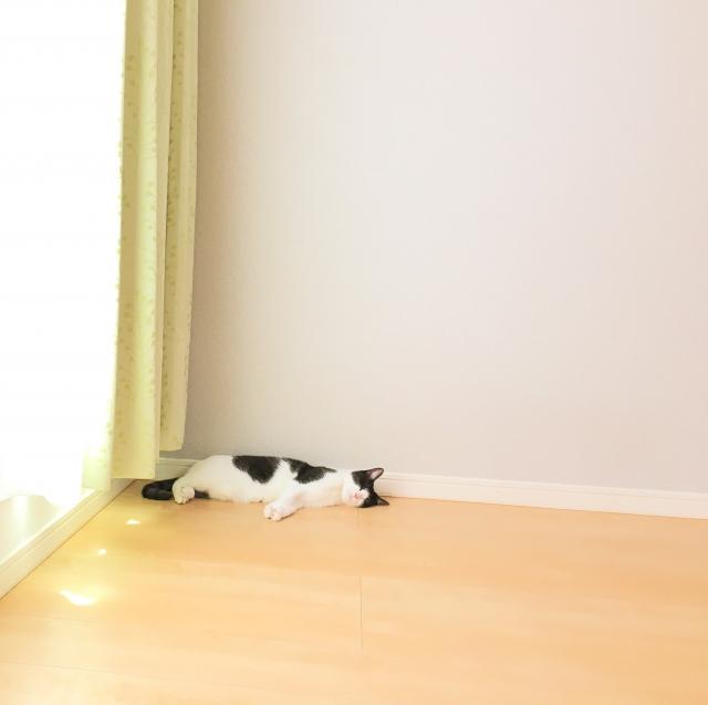 猫を飼うと家が綺麗になるって本当!?【準備編】