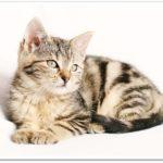 猫を初めて飼うとき、どこで探す?7つの入手方法と注意点は?