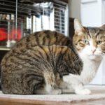 猫の寒さ対策は?寒さの見分け方とオススメの暖房器具は?