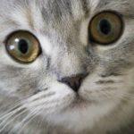 猫の目が暗闇で光るのは何故?真っ暗闇でも見えているの?