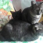 猫を初めて飼うなら兄弟の多頭飼い?不安が消える5つのメリットとは?