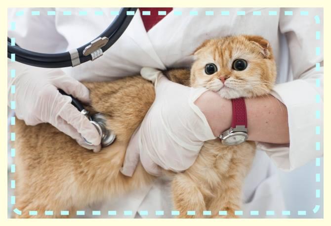 猫のからだと健康と病気