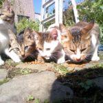 猫の避妊・去勢は必要?時期や費用は?手術後の変化や失敗の可能性は?