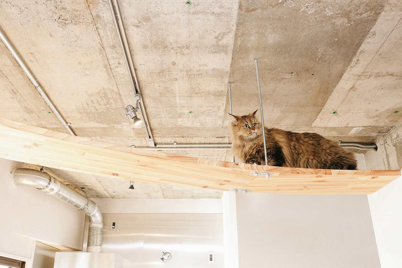 猫カフェでのルールやマナーは?~猫に嫌われない過ごし方~