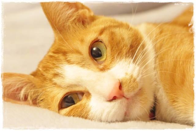 猫を一人暮らしの独身男性が飼う方法は?留守番できる?結婚したら?