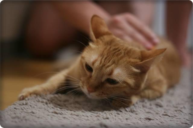 猫に嫌われる飼い主の特徴と行動は?仲直りする方法はある?