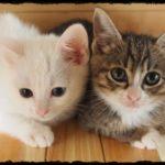 猫の魅力は何?好きなパーツと特徴は?飼育者のランキングも紹介!