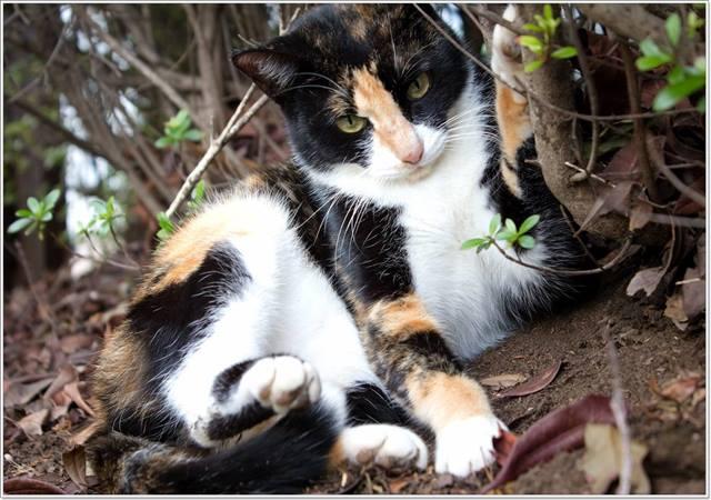 猫の種類を決める柄・模様は?被毛の色とパターン・長さを解説!