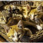 猫の多頭飼い、兄弟・姉妹同士の嫉妬心と行動は?理想的な接し方は?