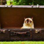 猫と新幹線で年末年始に帰省、持込み方法や料金・キャリーの選び方は?