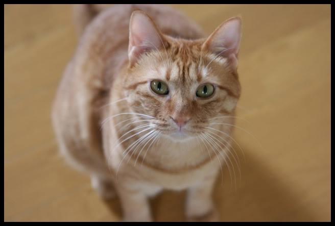 活発で人懐っこい猫に好かれる方法は?効果的な遊び方・接し方とは?