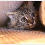 控えめでおとなしい性格の猫の特徴は?仲良く暮らすための注意点は?
