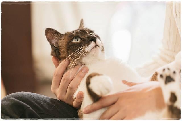 猫が抱っこを嫌がる理由は?好きにさせる方法と正しい抱き方は?