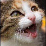 【動画】猫の鳴き声には意味がある?気持ちを読み取って仲良くなろう!