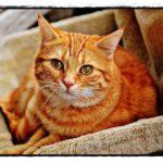 猫が快適に暮らす部屋作りは?キャットウォークと猫用扉の費用は?