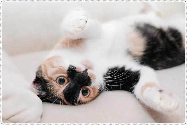 猫が飼い主のお風呂上がりにスリスリする理由は?濡れた髪を舐める?