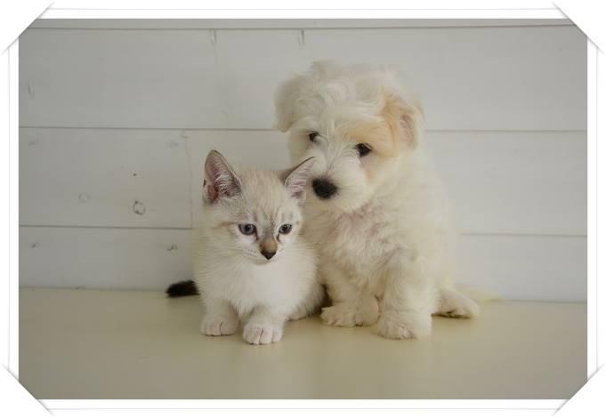 犬と猫を一緒に飼うことはできる?ストレスを減らす同居方法とは?