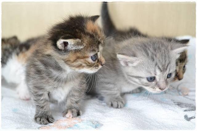 三姉妹猫の多頭飼い、仲良く遊ぶ方法は?満足するおもちゃや遊び場は?