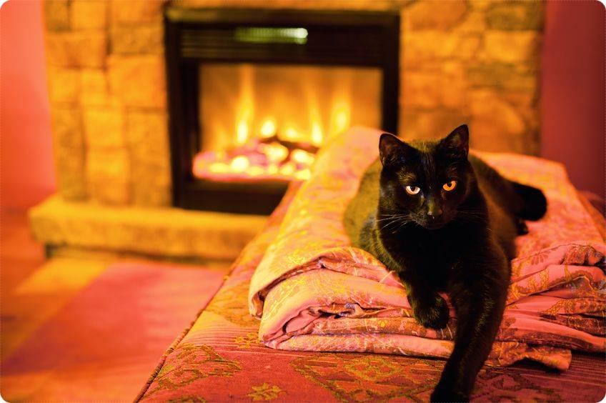 猫の快適生活