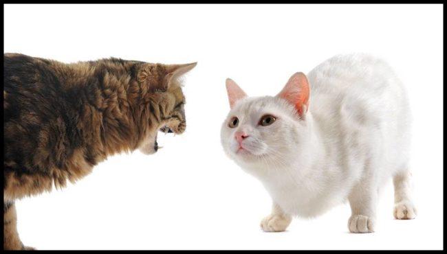 猫の多頭飼いでケンカする理由と対策は?相性の良い組み合わせは?
