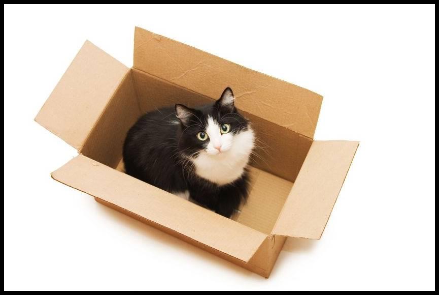 猫と引っ越しする時のストレス軽減対策と注意点は?移動手段は?