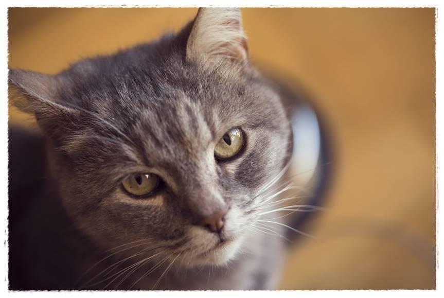 猫の気持ちを知る方法は?あなたへの本音が分かる仕草・行動まとめ!