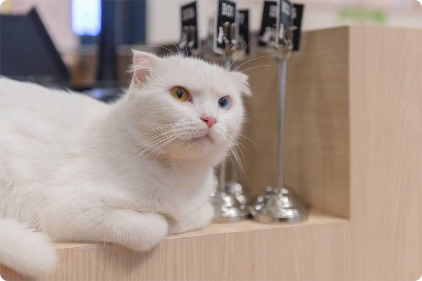 猫カフェは猫アレルギーでも行ける?症状を軽減する対策は?