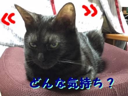 猫の耳で気持ちが分かる?動く方向から4つの感情を読み解く!