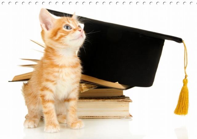 猫を一人暮らしの大学生が飼う注意点は?留守番は?費用は?