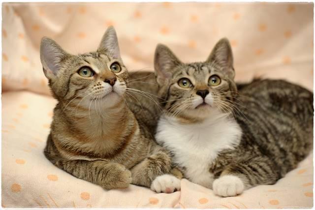 猫を多頭飼いする方法は?初心者が押さえるべき4ポイント!