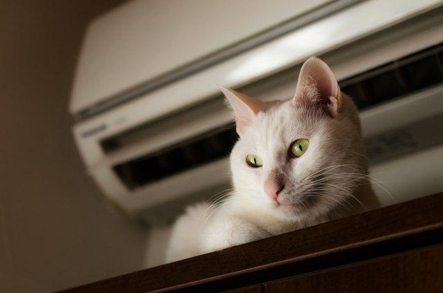 猫が夏を快適に過ごす冷房の温度は?留守番中と寝る時は冷房を消す?