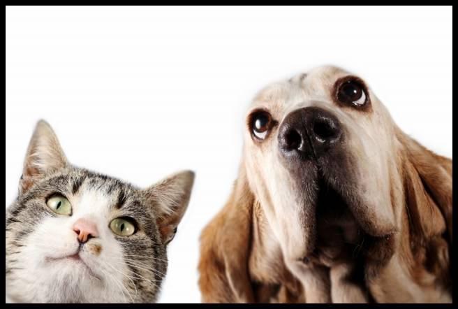 ザギトワの先住猫と秋田犬マサルが同居?仲良く暮らす方法はある?